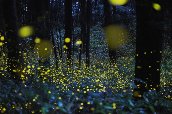 What do Synchronized Fireflies have to do with Communication?